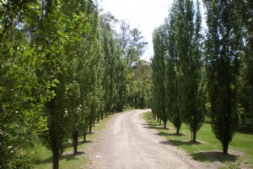 Tree lined driveway