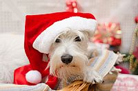 Keeping Pets Healthy and Happy at Christmas